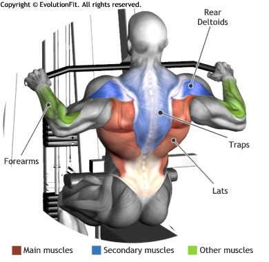 Great Back Exercises to build larger Lats